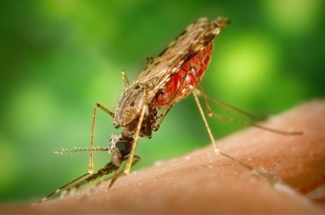 Zika+virus+causes+stir+in+Americas